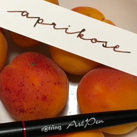 Lettering des Wortes Aprikose mit einem Rotring Artpen. Zeichnung und Foto: Janne Klöpper