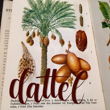Lettering des Wortes Dattel mit dem Zeichenprogramm Procreate. Zeichnung und Foto: Janne Klöpper