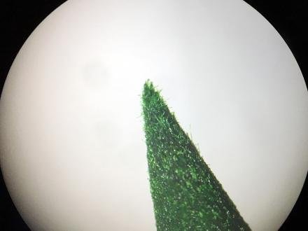 Spitze eines Tombow ABT Dual Brush Pen durch ein Mikroskop betrachtet. Foto: Janne Klöpper