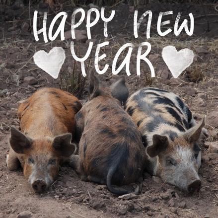 Drei Schweine liegen auf einem Acker, darüber der Schriftzug Happy new year. Foto und Lettering: Janne Klöpper
