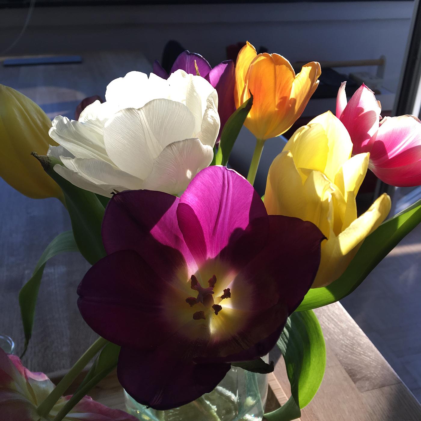Bunte Tulpen in einer Vase im Gegenlicht. Foto: Janne Klöpper